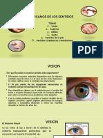 Organos de los sentidos_II_2020.pdf