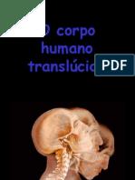O corpo humano translucido