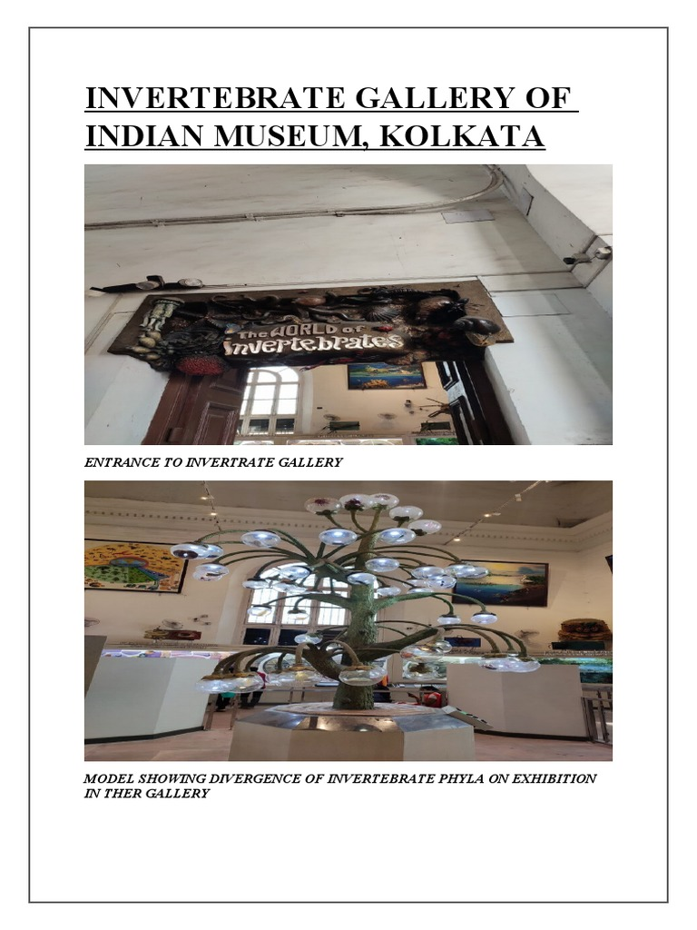 INVERTEBRATE GALLERY OF INDIAN MUSEUM.docx | Coral Reef | Sponge
