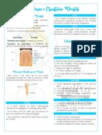 anatomia e escultura dental.pdf