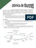 Clave dicotómica de tiburones y otras criaturas