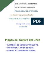 Unidad 4 Plagas de hortalizas chile-tomate-otros 14 04 2020.ppt