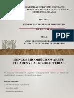 JARED MICRO ORGANISMOS DE LA RIZOSFERA EN POST COSECHA.pptx