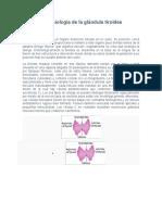 Anatomía y fisiología de la glándula tiroides