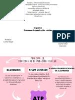 bioquimica esquema