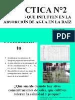 practica 2 vegetal.pptx