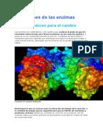 4 funciones de las enzimas.docx