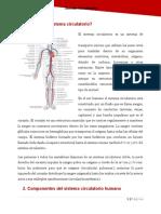 Qué es el sistema circulatorio.docx