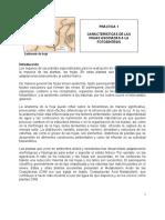 Práctica 1.  Características  hojas asociadas  fotosíntesis