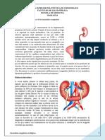 Anomalías congénitas renales