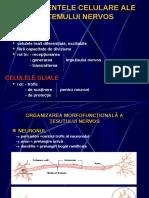 1.4.Fiziologia neuronului