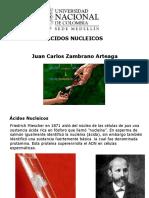 TEMA 8. ACIDOS  NUCLEICOS 2016-I.pdf