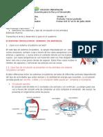 Grado 4  Ciencias Naturales Guía # 3 Sistema Circulatorio Cerrado