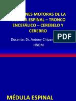 CLASE 2 - FUNCIONES MOTORAS DE LA MEDULA ESPINAL – TRONCO ENCEFÁLICO – CEREBELO Y CEREBRO 2020-I.pdf