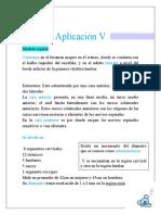 aplicacion 1