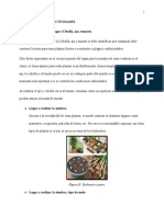 Manual de biohuerto-Desarrollo Sostenible