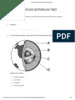prueba 7mo básico dinamica terrestre