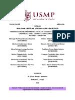 Informe S6 - GRUPO 8A