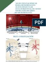 Clase HGT-Conjugación.pptx