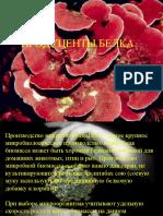 Продуценты белка1.ppt