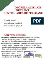 electroforeza acizilor nucleici
