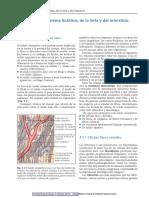 Drenaje Manual según el Método del Dr. Vodder2012