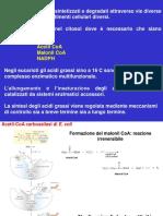 Biosintesi acidi grassi.pdf