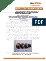 Anatomia microscópica de pallares