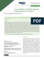 Lopez y Perez-Torres 2015 Universitas- Asimetria Artibeus.pdf