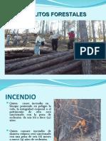 1-Delitos Forestales