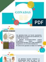 GONADAS Y HORMONAS.pptx
