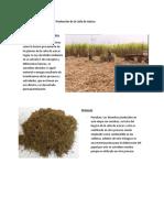 286996485-Desechos-en-el-Proceso-de-Produccion-de-la-Cana-de-Azucar-docx