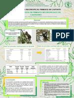 Diet Models In Neotropical Primates In Captivity
