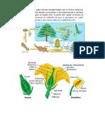 Clases de polinización de las plantas
