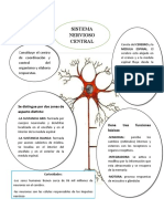 mapa mental sistema nervioso