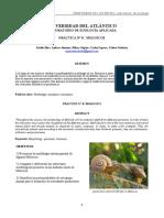 INFORME DE ZOOLOGIA MOLUSCOS