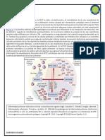 Fisiopatología EPOC