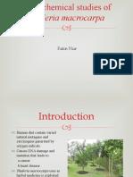 Phytochemical Mahkota Dewa