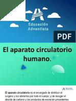 el aparato sirculatorio del ser humano