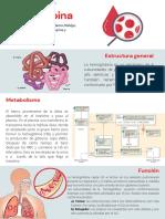 Grupo 8, Hemoglobina.pdf