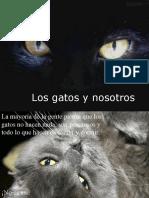 Los gatos y nosotros
