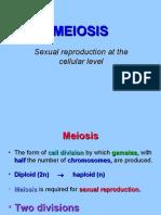 MEIOSIS rev2