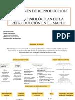 Funciones De Reproducción En El Macho