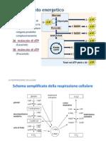 XVI Biochimica [modalit compatibilit]