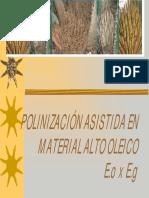 capacitacion POLINIZACIÓN ASISTIDA.pdf