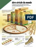 Infographie Carrefour - Le riz, première céréale du Monde