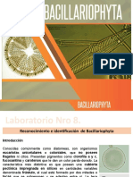 Bacillariophyta