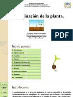 Germinacion de la planta