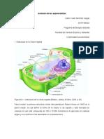 SANCHEZ_VARGAS_KAREN_YULIET_Anatomía de las espermatofitas