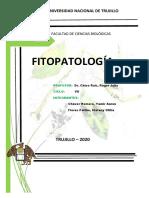 mapa e infografia fitopatologia-yamir